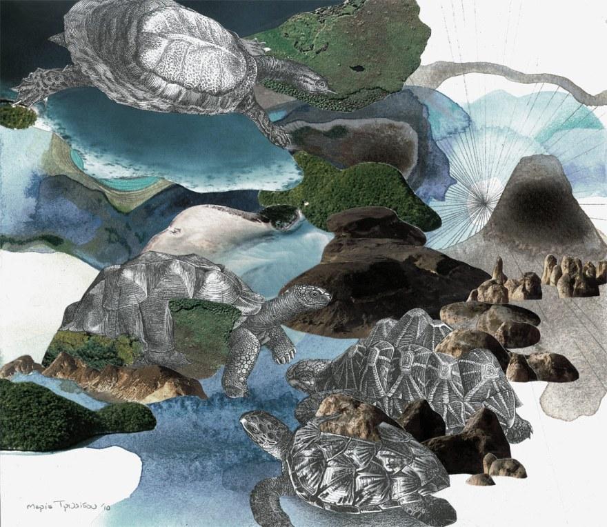 turtlescape